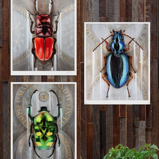 Beetle prints